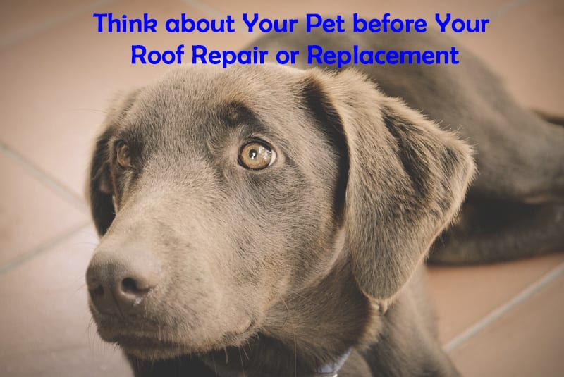 roof repair or roof replacement can scare pets
